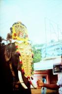 E100 G / 24x36 / Elephant - Kollam